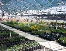Montana Native Plants Westscape Wholesale Nursery; Belgrade; source