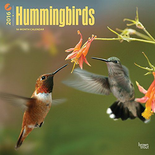 Hummingbirds 2016 Wall Calendar:   Known for their diminutive size, bright iridescent colors, and hovering flight, hummingbirds live only in the Western Hemisphere. However, they can be found almost anywhere between Argentina and Alaska. Early Spanish explorers called these migratory birds joyas voladoras, or flying jewels. This Hummingbirds wall calendar features beautiful images of these vibrant little birds. BrownTrout is committed to sustainability.