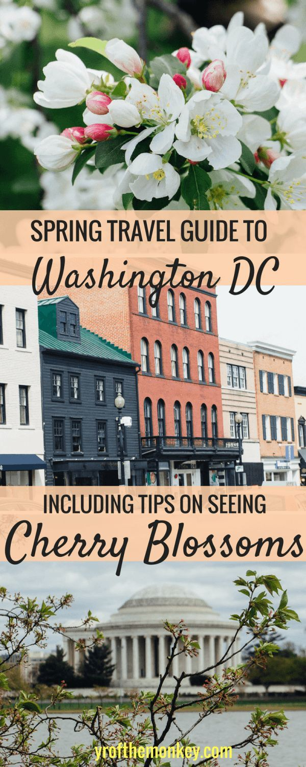 This is a spring travel guide to Washington DC, USA for the Cherry Blossom festival. A guide to best DC sights, activities and tips to see the cherry blossoms.