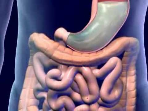 The ultimate cheats guide to digestive system animation video download human digestive system animation part 1 video songs bangla romantic download learn about digestive system overview of the anatomy and workings of the ccuart Choice Image