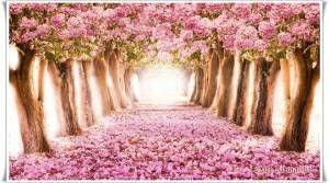Porque os meus pensamentos não são os vossos pensamentos, nem os vossos caminhos, os meus caminhos... porque, assim como os céus são mais altos do que a terra, assim são os meus caminhos mais altos do que os vossos caminhos, e os meus pensamentos, mais altos do que os vossos pensamentos.