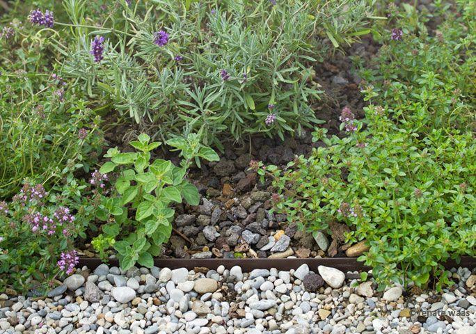 Gartenplanung Pflegeleichter Garten : GeniesserGarten  Pflegeleichter Garten