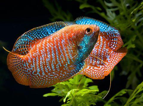 Oltre 25 fantastiche idee su pesci d 39 acquario su pinterest for Acquario per pesci