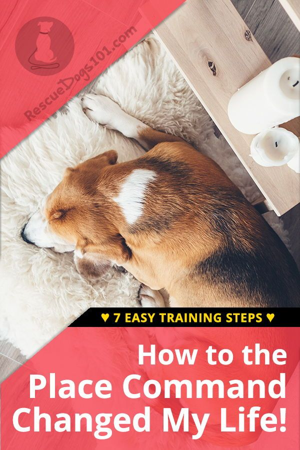 How The Dog Place Command Changed My Life Dog Training Training