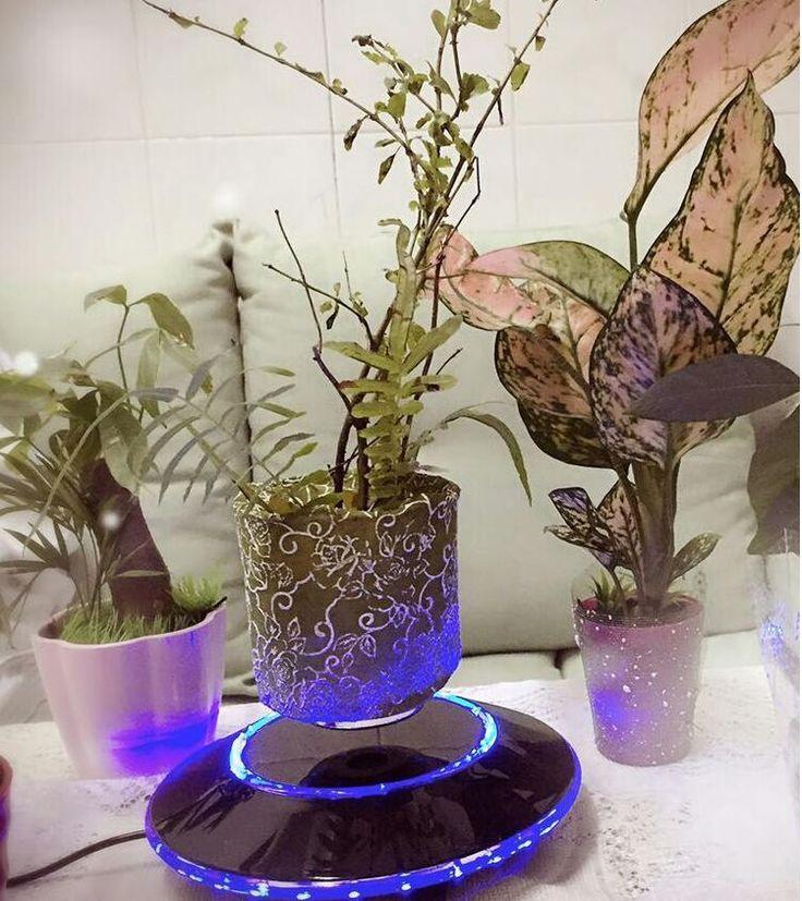 Indoor plant,air flowerpot.