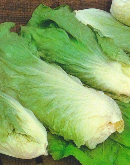 Groenlof (of suikerbrood) is een vergeten groente die je in de meeste kookboeken niet tegenkomt. De officiele naam is Groenlof, maar in Limburg en België...