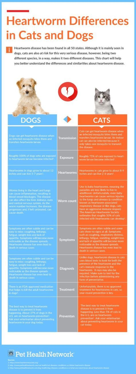 What You Need To Know About Heartworm Disease Vet