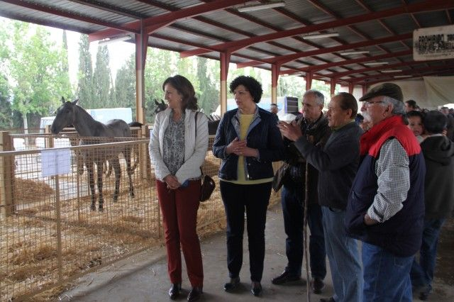 Más de 400 caballos y asnos participan en la Feria de Ganado Equino de Puerto Lumbreras