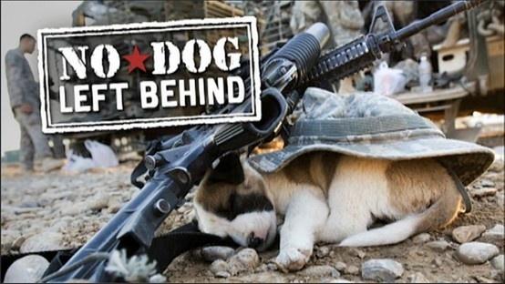 Stray Dog Documentary Watch Online Free