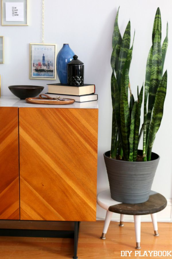 The Best Indoor Plants And How To Keep Them Alive And