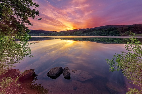 Reflections & Dew Drops ♥♥♥ Burrator, Dartmoor National Park, Devon, UK