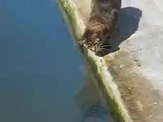 Cat catching catfish :V Via: @FishingLovers99 #bassfishing  #fisheries  #fishingshop  #fishingtackleshop  #fishinghook  #lure  #reel  #fishingstore  #go fishing  #walleyefishing  #huntingandfishing  #bait  #tackle  #angler  #saltwater  #baitandtackle  #fising  #carpfish  #shimanofishing  #deepseafishing  #jig  #fishingknots  #livebait