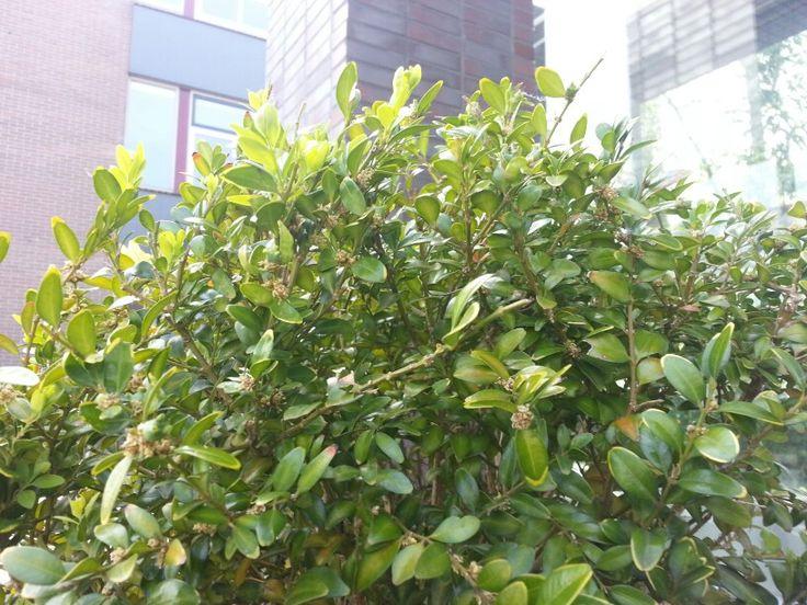 plant Graydon