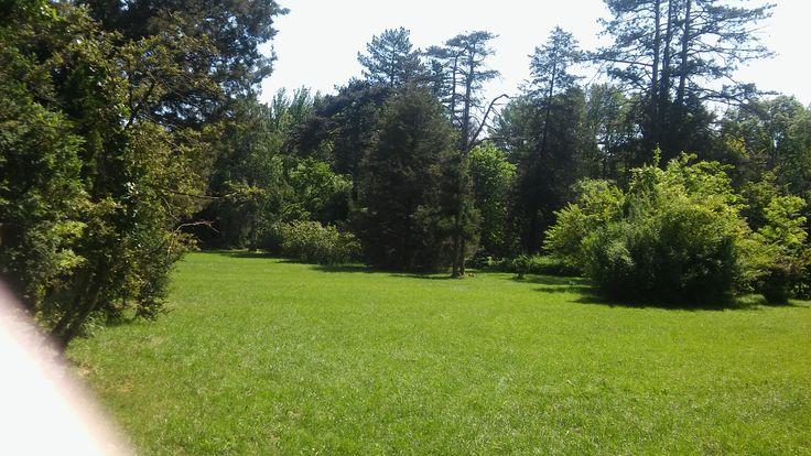 Szarvas Arborétum 4.
