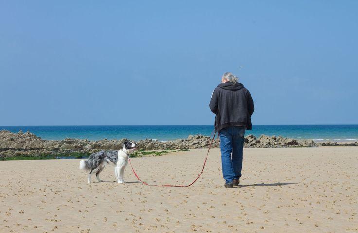 Urlaub mit Hund in der Normandie: Spiel und Spaß für Zwei- und Vierbeiner an den Stränden der Normandie. Hier ist Ihr Hund am Strand willkommen!
