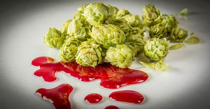 AB InBev-SAB Miller merger leaves hundreds of small, independent brewers without access to important hops as AB InBev earmarks the entire production for its own brewers.