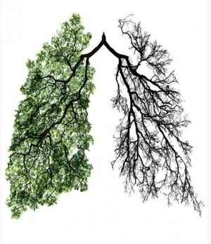 タバコを吸い続けていると、黒ずんだ肺になる。|おじゃかんばん『Dr.TiMEの健康フォト日記』