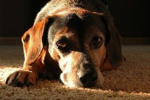 A Senior Dog Health Management – Rich Diet, Exercise, Vet Checkups & Supplements