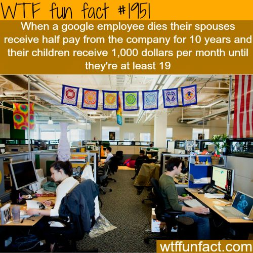 Best companies to work for -WTF fun facts GOOGLE!!!!!!!! Super happy working employee environment