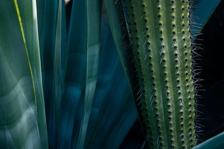 Agave and Cactus Beauty in Baja. Photography by Esther Sanchez
