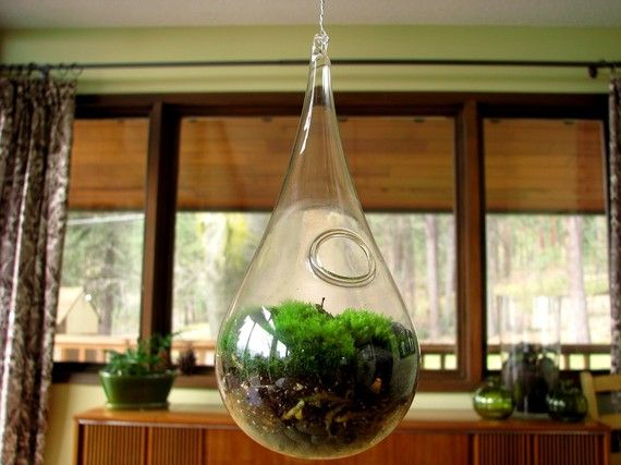 Hanging Glass Living Moss Terrarium by TinyTerrains on Etsy, $35.00