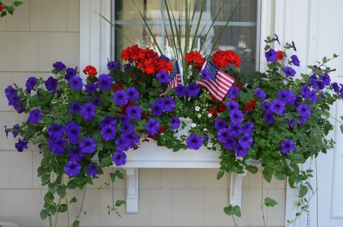 Red white and blue window box
