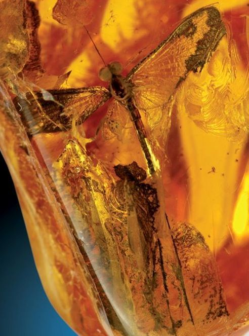 Dragonfly in Amber - that would be so cool to find