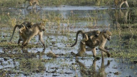 Moremi Wildlife Reserve Botswana  http://www.gunns-camp.com/