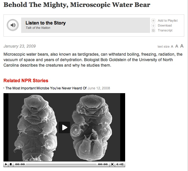 "NPR audio story ""Behold The Mighty, Microscopic Water Bear"" incl embedded video after link. Plus additional videos here: http://tardigrades.bio.unc.edu/movies/"