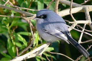 HabitantesDeLaCiudad: Pájaros silvestres, hermosos habitantes de la ciudad