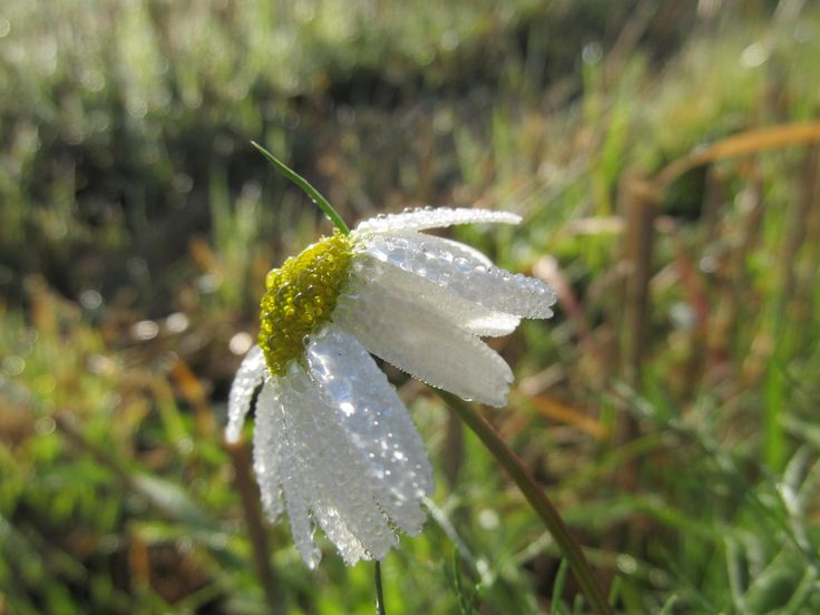 Dewy flower by Tomáš Junga on 500px