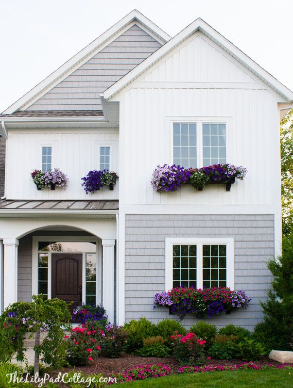 Window Box Tips -petunias, fertilizing with miracle grow bloom boost every Sunday - The Lilypad Cottage
