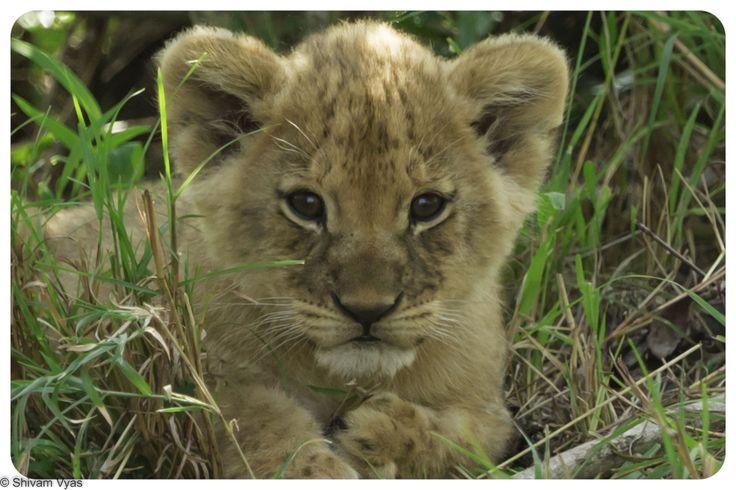 A cute cub for your viewing pleasure stitchfix stylist. KM