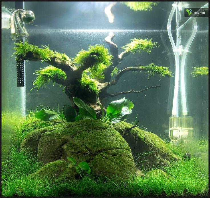 Nano Cube nach 8 Wochen #aquascaping #naturaquarium Aquascaping ...