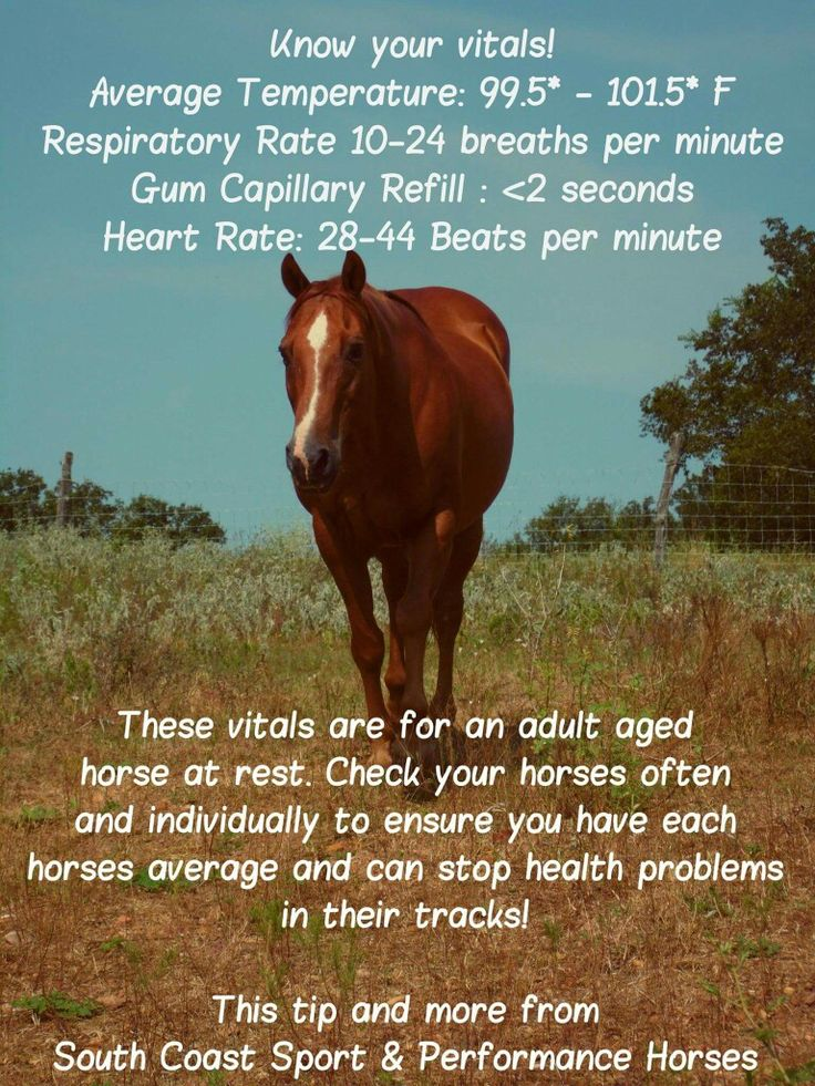 Horse care tips                                                       …
