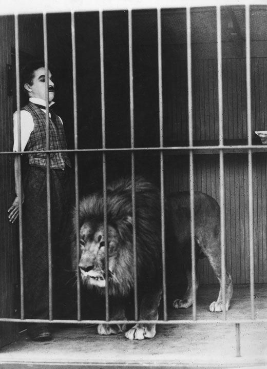 charlie chaplin and a lion: Circus Lion, Cat People, Charli Chaplin, Cinema, Charliechaplin, Animal Inspiration, Charlie Chaplin, Classic Hollywood, Charles Chaplin