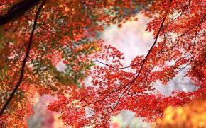 ramo, fogliame, autunno