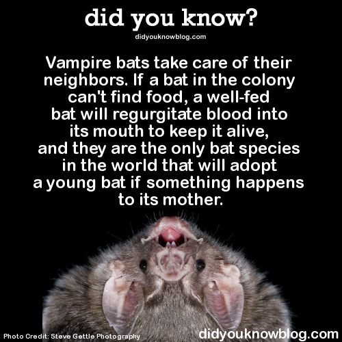 Let's not forget that they remember who they help, so next time if they are hungry that bat needs to return the favor....