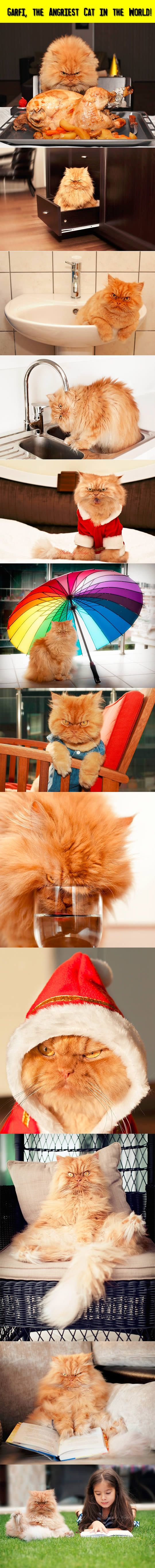 Best Garfi Cat Images On Pinterest Angry Cat Grumpy Cat And - Garfi is officially the worlds angriest cat