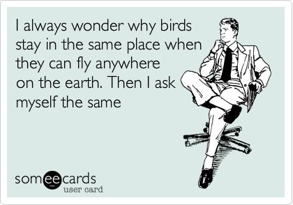 I always wonder why birds stay in the same place when they can fly anywhere on the earth. Then I ask myself the same.