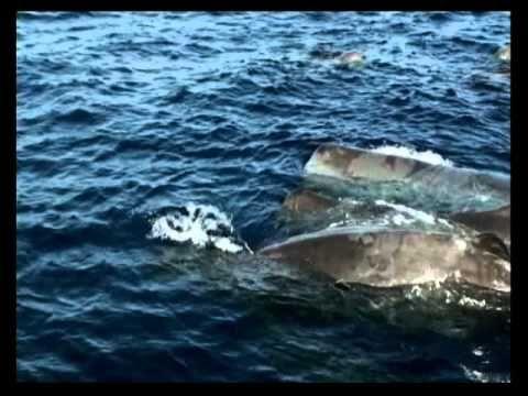 Θαλάσσια θηλαστικά, oι συγκάτοικοί μας στις ελληνικές θάλασσες μέρος 2ο