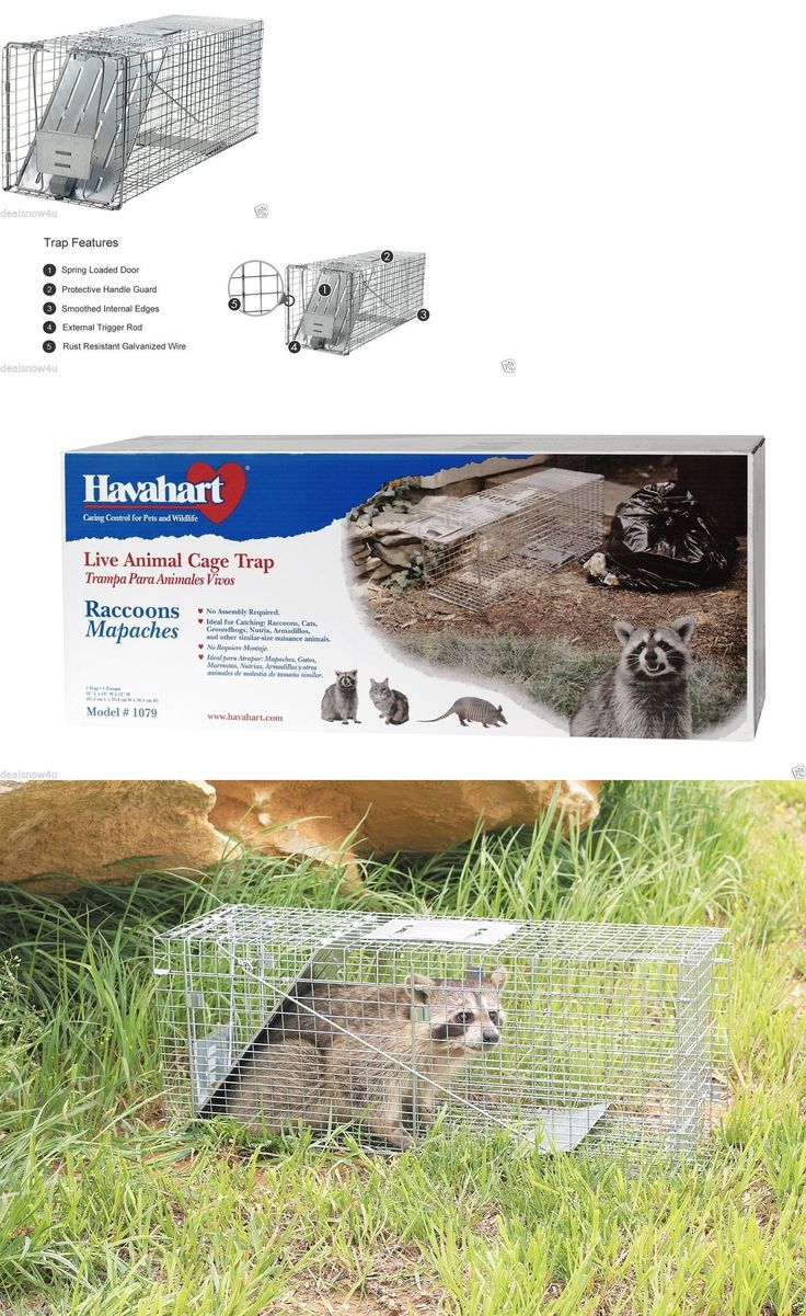 Trapping Supplies 71108: Live Animal Trap Catch Raccoon Groundhog Opossum Stray Cat Catch Release Cage -> BUY IT NOW ONLY: $54 on eBay!