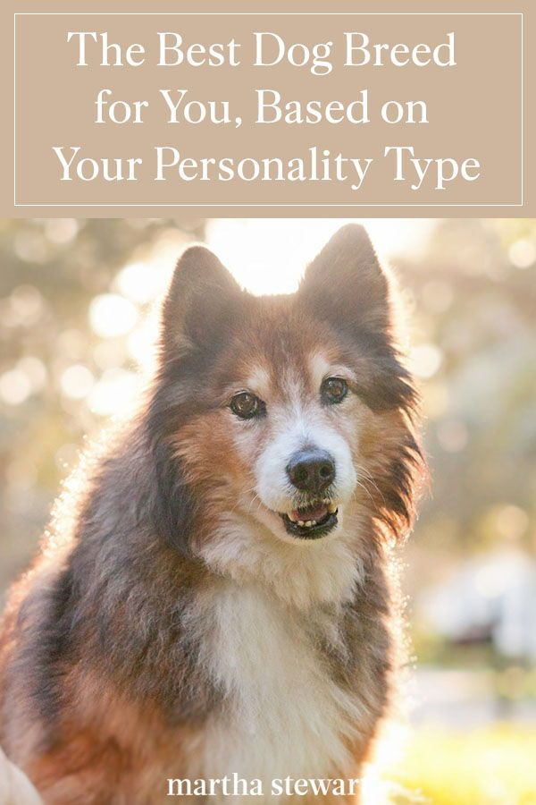 The Best Dog Breed For You Based On Your Personality Type In 2020 Dog Breeds Best Dog Breeds Breeds