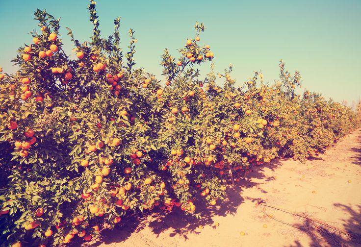 Retrouvez La Compagnie des Sens sous le soleil des pamplemousses ! #aromatherapy