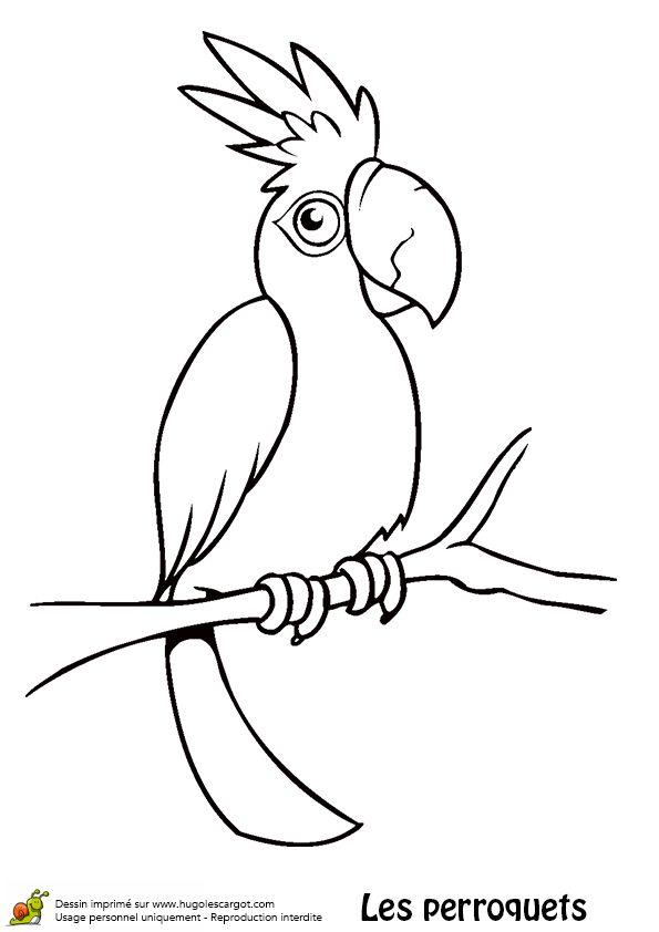 Les 110 meilleures images du tableau coloriages d 39 oiseaux - Perroquet dessin ...