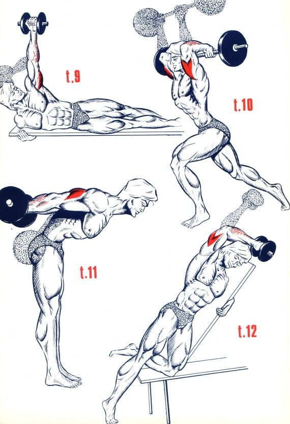 Bodybuilding Supplements Triceps WorkoutArm