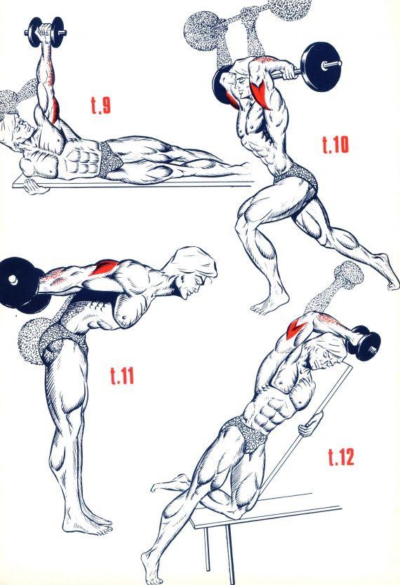 Triceps2                                                       …                                                                                                                                                                                 Plus