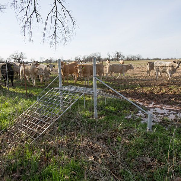 Tips, tricks save cattle producers time and energy