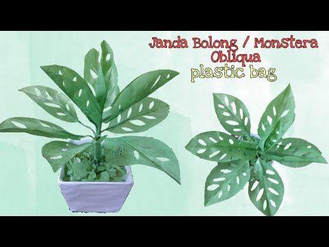 Diy Tanaman Janda Bolong Monstera Obliqua Dari Plastik Kresek How To Make Flower With Plastic Bag Youtube Tanaman Bunga Kreatif