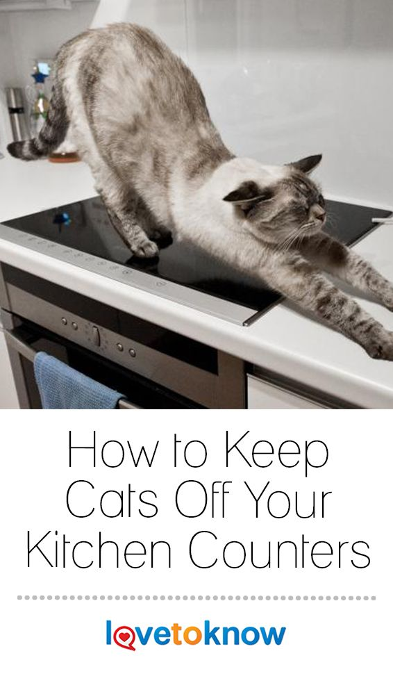How To Keep Cats Off Your Kitchen Counters Keeping Cats Off